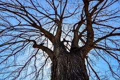 Tree of Life (Kerstin Winters Photography) Tags: äste branches sky colorado tamron natur nature naturfotografie outdoor d5500 flickrnature flickr nikon nikkor nikondigital nikondsl detail baum tree