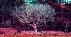 PARANOID (mauricioEugenio) Tags: psicodelic paranoid dreams sureal abstract abstrato nature natureza three pink