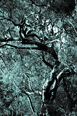 Warren Purnell Photography (wozzinozz) Tags: twisted tree creepy monochrome gnarly gnarl