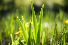 Frühling (Ilhan Yapici) Tags: flower spring fruehling ilkbahar