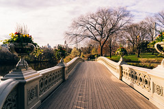 Let's cross this one together (RomanK Photography) Tags: centralpark landscape manhattan nyc newyorkcity flowers sonyalpha spring