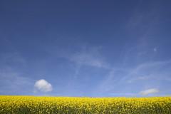 Yellow & blue (JohannesMayr) Tags: raps blue sky blau gelb yellow rape himmel wolke clouds