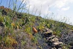 Loyal Companion (simonturkas) Tags: lanzarote canaryislands islascanarias volcano explore travel adventure spain amazing landscape interesting