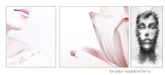 transition (Joseph Dimartino) Tags: abstract separation composite postcard ambiguous tryptch art fineart faceless tulip flower conceptual divided change escape