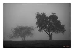 Seeing Double (TooLoose-LeTrek) Tags: fog mist haze tree atmospheric ethereal