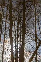 reflectin forest (sami kuosmanen) Tags: kuusankoski kouvola metsä photography puu taivas tree trees suomi finland forest heijastus reflection water valo värikäs vesi joki river sky spring