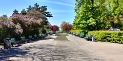 20170424_140559_HDR (WhiteRabbitCZ) Tags: lg g6 smartphone review