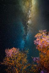 Sequoia Galactic