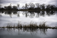 Parallel Symmetries (courtney_meier) Tags: boulder bouldercounty colorado cootlake calm lake plants reeds reflection reflections rushes water windless unitedstates us