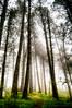 25 aprrrrile (zuiko94) Tags: nikon nikkorlens nikonian nikonlandscape landscape nature naturelovers fog day 25aprile bosco amici photography