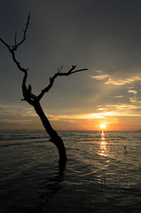 Lonely (Dingo photography) Tags: sun sunset tree dead lonely alone dx d5100 1855mm goldenhour seaside seascape landscape coastal outdoor sea water silhouette branches dingophotography timelessframes ripples ray sky nikon