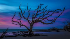 Still Standing Tall-9194 (Silva Image) Tags: jekyllisland seascapes
