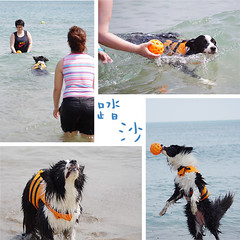 02 (inmonkey62) Tags: dog flying coin collie pentax border dal bordercollie disc   kx  50300