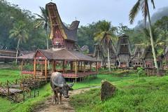 Desa Kete Kesu | Tana Toraja