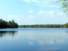 East Creek Pond (Christine_Ray) Tags: new pine forest state reserve national jersey pinelands barrens belleplain belleplaincapemayandparvin