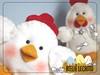 Galinhas - Chicken (Ateliê Lecanto) Tags: chicken animals galinha farm felt mold feltro animais pintinho molde fazenda