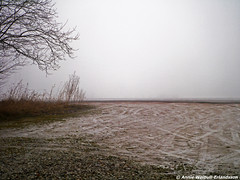 The Beauty of Blank (Annieverse) Tags: winter lund nature skne europe sweden scandinavia whitespace