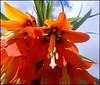 So Beautiful .. (** Janets Photos **) Tags: uk flowers plants flora unknown hull masterphotos artisticflowers takenwithlove mindigtopponalwaysontop lovelyflickr blinkagain thegoldenachievement goldenachievement dreamlikephotos takenwithhardwork lovelynewflickr