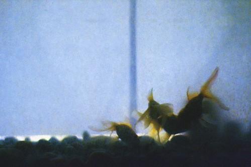 fish dark gold aquarium tank goldfish gritty fishtank noise digitalnoise