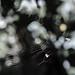Cobweb / Spinnennetz