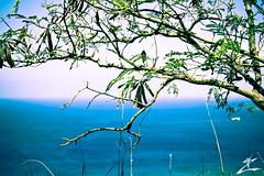 Oceanview (MjZ Photography) Tags: ocean tree green beach water hawaii boat honeymoon branch waikiki oahu bunker diamondhead honolulu shelter bomb diamondheadcrater diamondheadstatemonument
