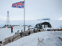 Antarctica S90-111123-085 (Kelly Cheng) Tags: travel white snow color colour bird tourism animals fauna daylight colorful day outdoor flag antarctica colourful traveldestinations snowysheathbill portlockroy antarcticpeninsula
