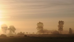 Landschaft unter Nebelschwaden; Meggerdorf, Stapelholm (11) (Chironius) Tags: schleswigholstein deutschland germany allemagne alemania germania   ogie pomie szlezwigholsztyn niemcy pomienie morgendmmerung morgengrauen  morgen morning dawn matin aube mattina alba ochtend dageraad  amanecer gegenlicht nebel werb sonnenaufgang sunrise zonsopgang  morgens dmmerung fog brouillard niebla landschaft silhouette