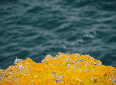 (miemo) Tags: ocean travel sea summer france nature moss brittany rocks europe bretagne olympus telephoto shore atlanticocean omd em5 bellele pointedepouldon panasonic100300mm