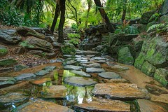 Stepping Stones (83years) Tags: light plants color tree nature water leaves rock stone forest season relax landscape outdoors golden rocks peace stones background peaceful calm line clean foliage clear change liquid