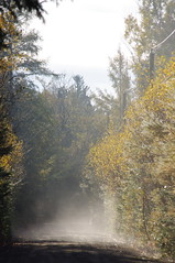 (vansero) Tags: road wood morning trees shadow mist tree yellow misty forest sunrise woods shadows