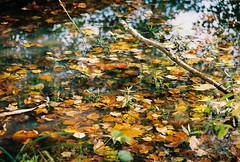 RAD fall color 2 (RubyT (loving winter light)) Tags: autumn reflection fall film water leaves analog pentax kodakultramax400 pentaxlife justpentax fa28105f3245 pentaxpz1 pentaxart rad20131020