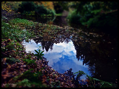 Reflections in Crathes Castle grounds (Salmcpzaz) Tags: trees sky plants cloud plant reflection tree nature water leaves clouds reflections landscape scotland leaf scenery skies autumnleaves scottishscenery