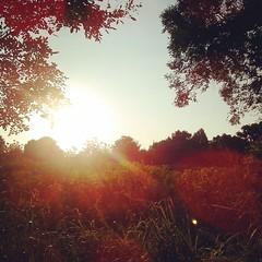 พระอาทิตย์ตกดินสวยๆอีกรูป ... #sun #sunny #sunset #sunrise #nature #colorful #beautiful #forest #instalike #instagood #instamood