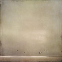 The Dance (sally banfill) Tags: seagulls seascape misty fog sallybanfill
