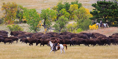 IMG_2809-2.jpg (kendra kpk) Tags: horse snow rain fog southdakota blackhills spearfishcanyon cowboy september bison custerstatepark custer americanbison spearfish 2013 buffaloroundup dakotawindsphotography blackhillsphotoshootout kendraperrykoski