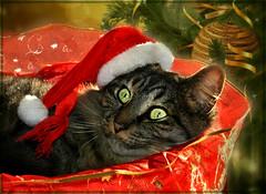 Waiting to Christmas
