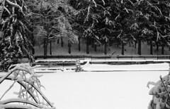400TX:365 - Week 52 - All's Quiet on Christmas Day (.:Axle:.) Tags: winter bw snow ontario canada slr film ice project pull blackwhite nikon kodak trix snowstorm hc110 400tx icestorm nikonf3 asa200 conservationarea belfountain forksofthecredit filmphotography kodaktrix400 creditriver belfountainconservationarea dilutione aisnikkor50mm114 onestoppull believeinfilm 52rollsnet 400tx365 52rollproject
