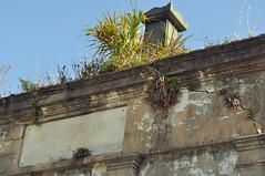 Cazadores DOrleans plants
