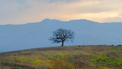 valdorcia 15 (explored) (lotti roberto) Tags: valdorcia toscana tusc tree albero inverno winter cloudy day fav25 fav50 fav75 fav100 fav125 fav150 fav175 fav200 fav225 fav250 fav275 fav300 fav325