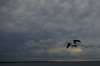 Seagulls (MissTitty) Tags: life sea sky seagulls clouds grey grigio nest flight volo nido salento gabbiani nubi southitaly ssmi mygearandme mygearandmepremium mygearandmebronze ringexcellence gallipolivecchio vigilantphotographersunite vpu2