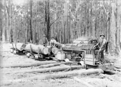 EL051_009 (Trainiac) Tags: train log bush tram railway tasmania