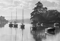Monterey Pine Kingsbridge (tramsteer) Tags: wood clouds boats mono blackwhite estuary kingsbridge cloudscape southhams southdevon montereypine southwestengland tacket tramsteer tacketwood