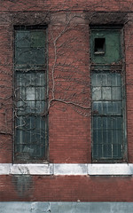 vines (they say you laughed when you heard my name) Tags: windows abandoned vines symmetrical