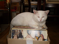 Mystic (universalcatfanatic) Tags: wood red cats brown white plant records green cat chair floor legs chairs box top hard vinyl record boxes mystic lay hardwood laying