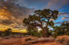 Colorado National Monument (Happy Photographer) Tags: sunset tree colorado desert redrock hdr grandjunction coloradonationalmonument happyphotographer coldshiverspoint mygearandme mygearandmepremium mygearandmebronze mygearandmesilver amyhudechek