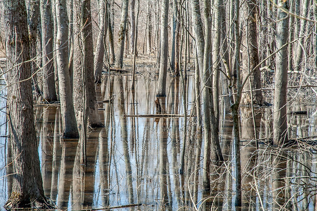 Stillwater Marsh - March 20, 2014