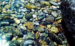 (*paz) Tags: chile sea colors mar agua marino piedras transparente