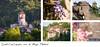 21,5x10cm // Réf : 10031005 // Saint-Cirq-Lapopie (Editions Jourdenuit Patrimoine) Tags: lot saint cirq lapopie france eglise rocher falaise calcaire village beau prefere artistes carte postale edition jourdenuit