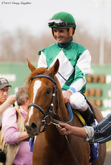 Purely A Dream (Casey Laughter) Tags: racehorse turfway thoroughbred horse horseracing horses winner loser fun racing racetrack race track saddlecloth tack gate taa