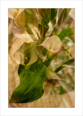 Pot Plant Impression. (Mikec77) Tags: potplant tripleexposure